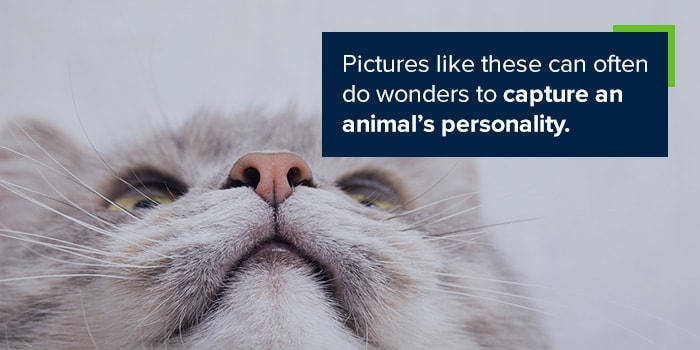 Pictures like these can often do wonders to capture an animal's personality.